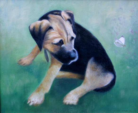 phoca_thumb_l_Border Terrier (oil)