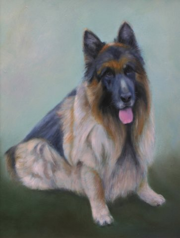 phoca_thumb_l_German Shepherd (oil)