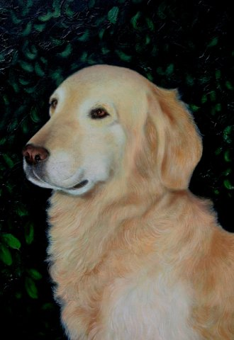phoca_thumb_l_Golden Retriever (oil)